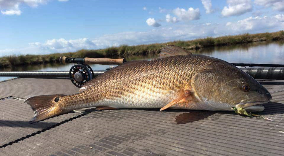 Redfish Fly Patterns