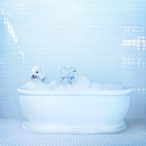 Frankie Cosmos - Vessel-LP-South