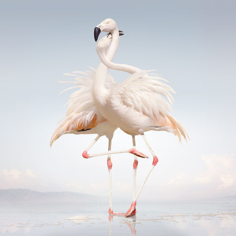 Rustie - Green Language-CD-South