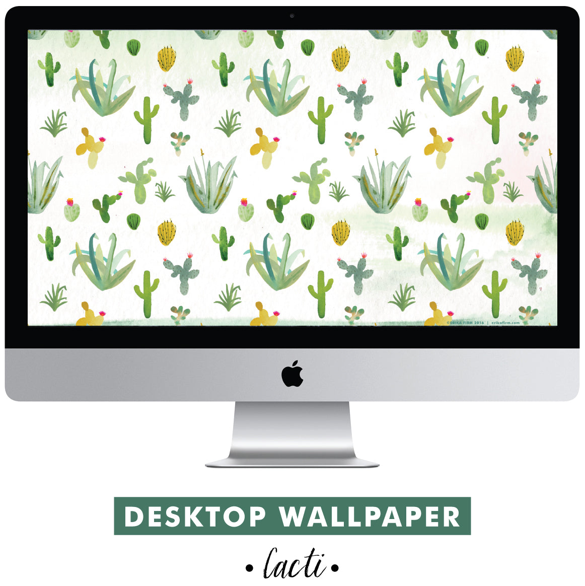 Cactus wallpaper for your desktop by Erika Firm