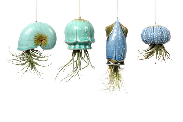 Hanging Airplant Shell Decor