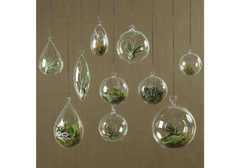 Hanging Bubble Terrarium Teardrop