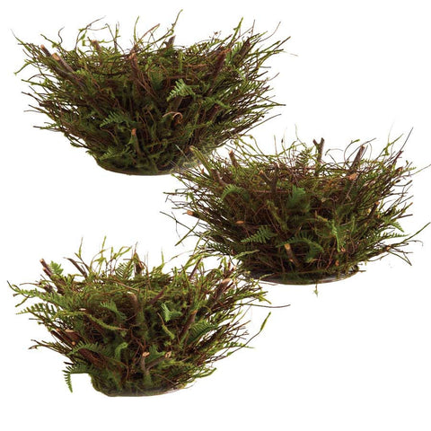Mossy Twig Bird Nests