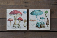 Square Canvas Wall Print with Mushroom Image, 2 Styles ©