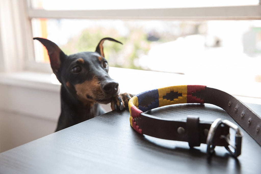 Are Leather Collars better than Nylon?