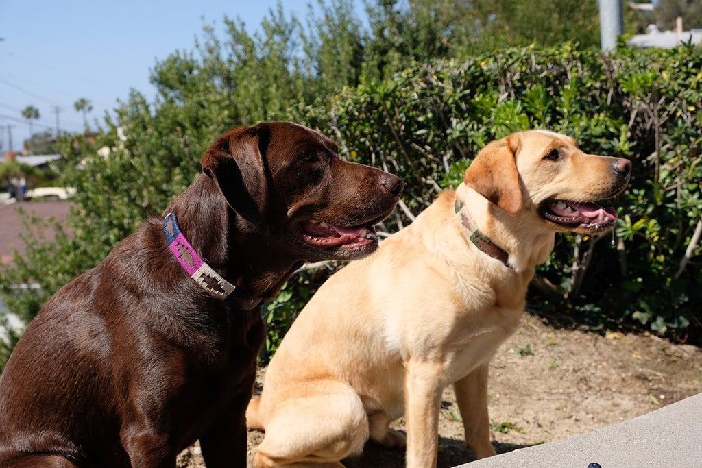 Why do pet owners often prefer leather collars for their dogs?