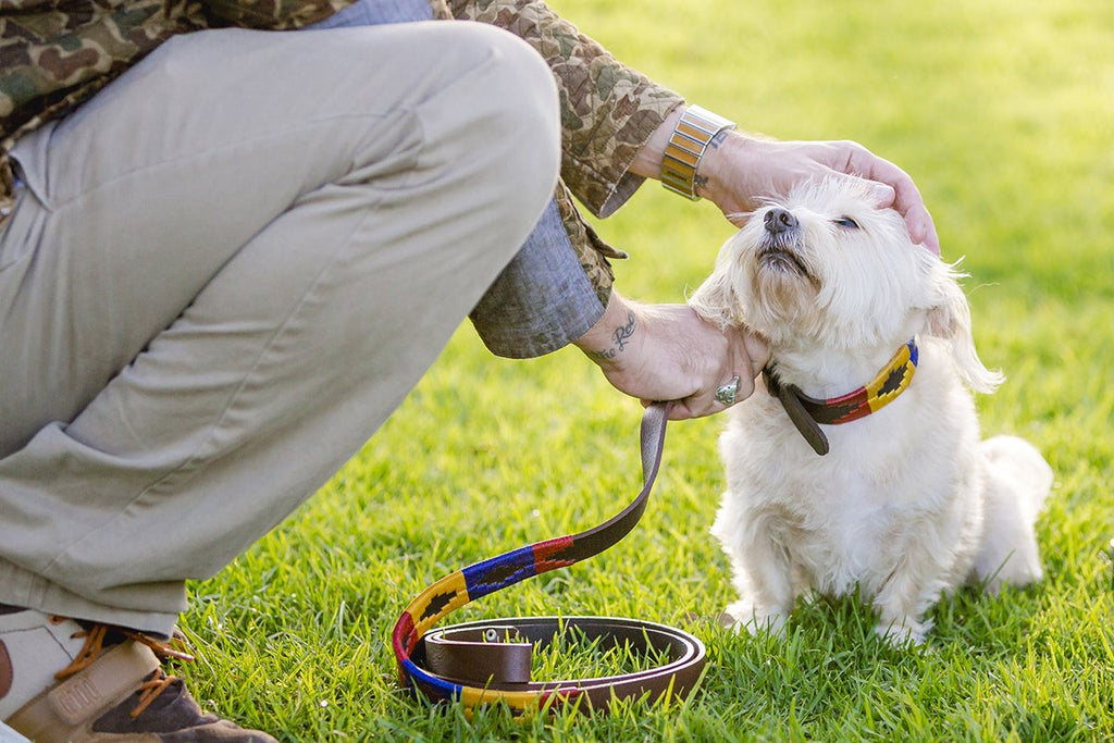 How to Clean and Maintain a Leather Dog Collar
