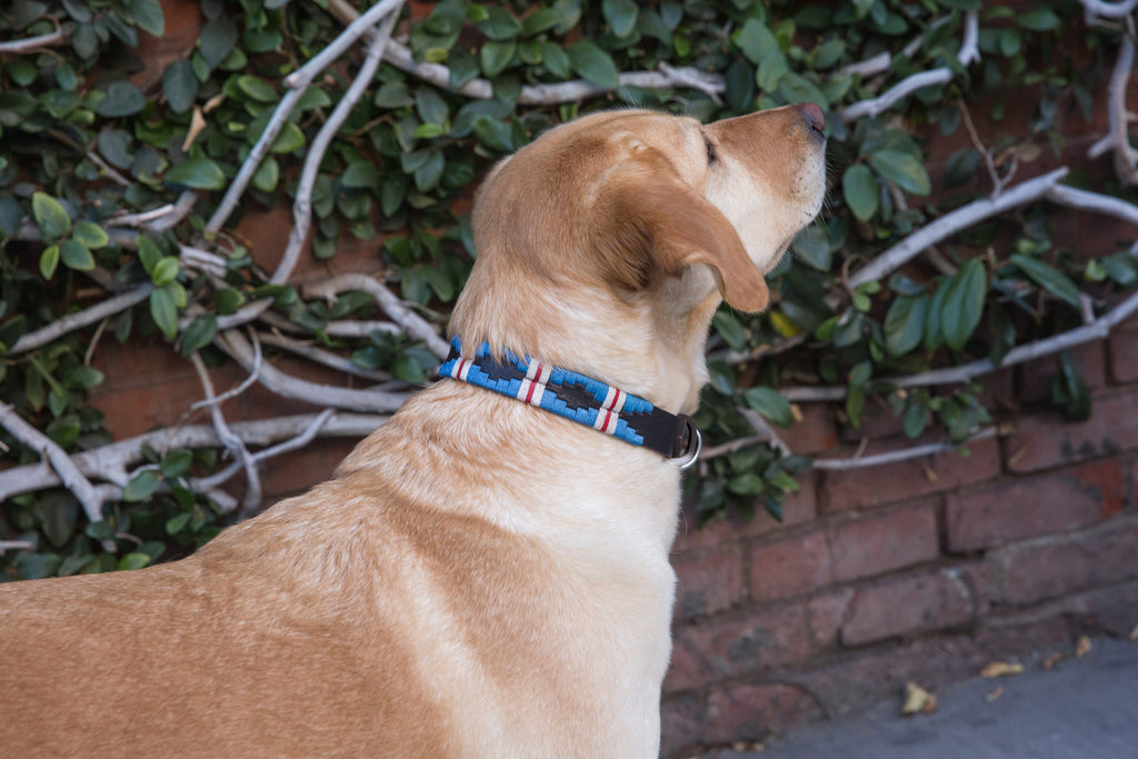 Dog with The Pacific Leather Dog Collar - vibrantly colored wax threads in light blue with a white and red stripe