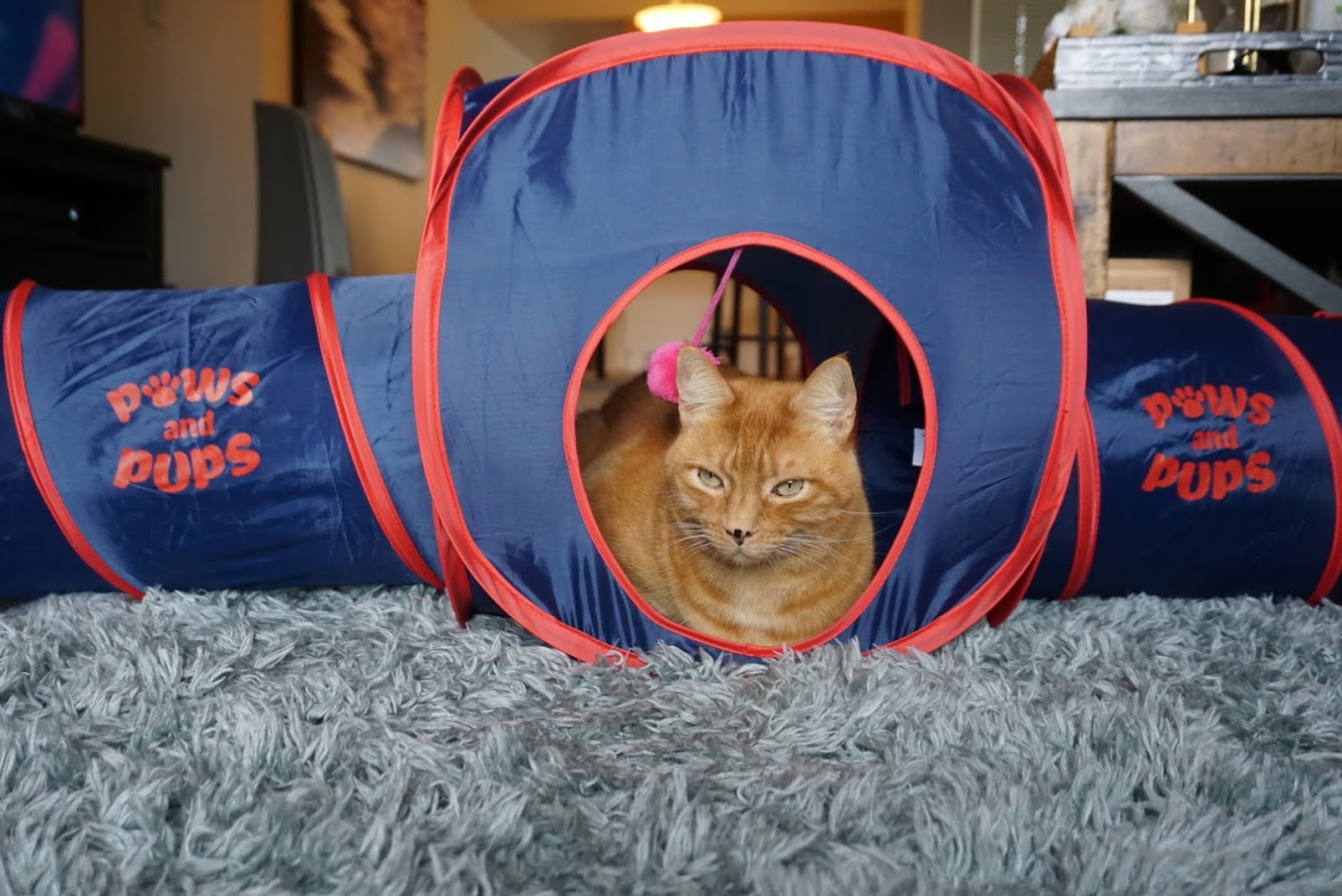 Paws and Pups Cat Home Collapsible House Cubes Tunnel Tassels (1 Cube 2 Tunnels) - Gaucho Goods