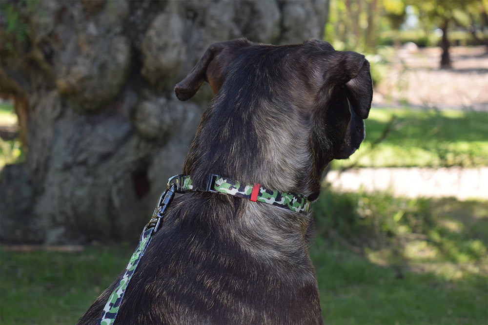 Dog Wearing Nylon Dog Collar - Camo