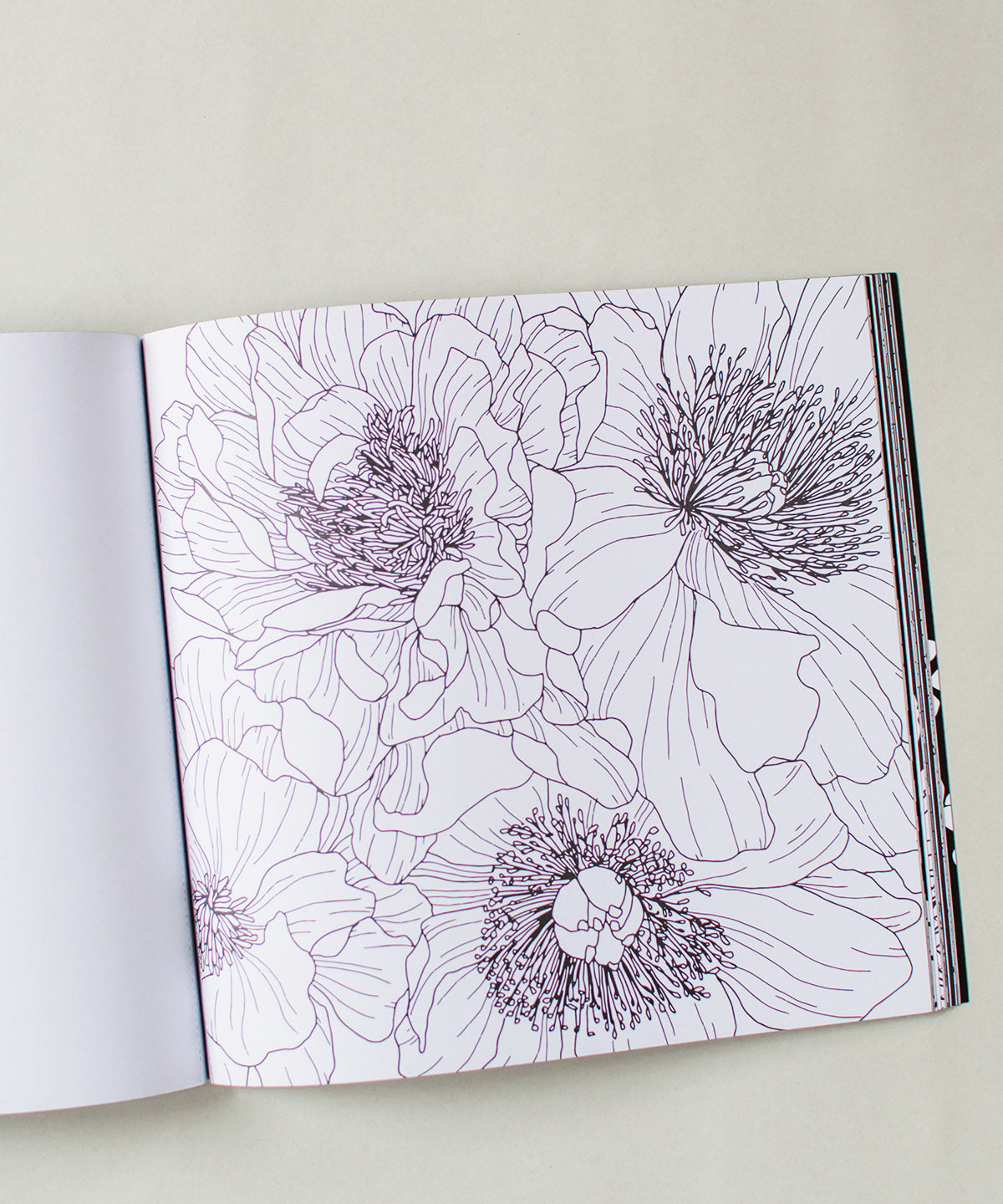 Bloom Coloring Book - Sister Golden
