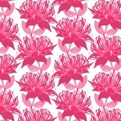 Waratah / Pincushion Non-Exclusive