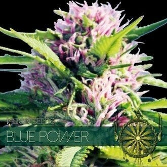 BLUE POWER- VISION SEEDS