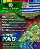 FLOWER POWER- URUGUAY SEEDS