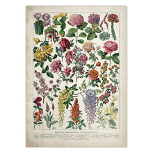 Load image into Gallery viewer, Witch Botanical Posters