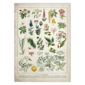 Witch Botanical Posters
