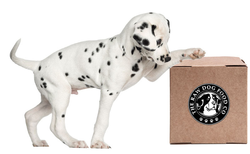 raw dog food diet for puppies