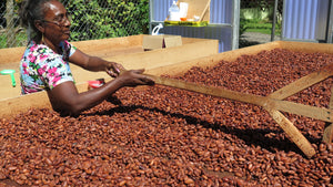 Organic Cocoa Beans (fermented and dried)