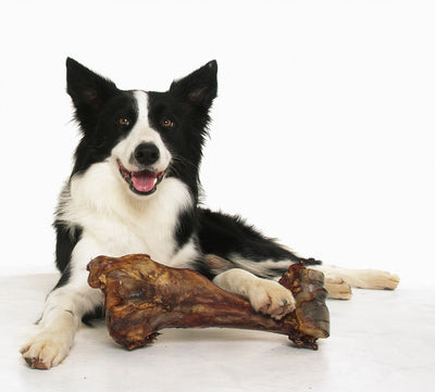 HAM BONE  -  Premium Meaty Beef Full pork femur bones for Dogs 1,2 or 10 Count by 123 Treats