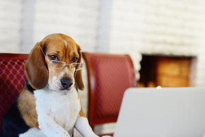 Smart tips for keeping your dog busy while you are going to work