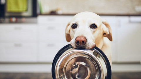 What food do dogs prefer?