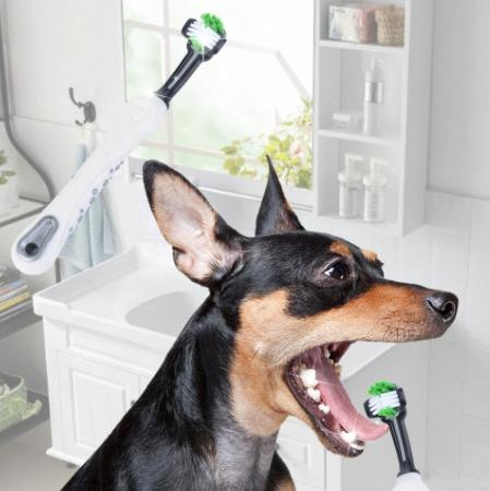 DOG GROOMING & CLEANING SUPPLY