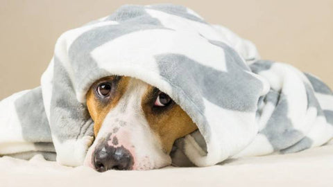 Discover our stylish collection, with the highest quality soft and absorbent towels, comfortable, and durable cotton bathrobes. The perfect combination of towels and blankets will make your dog warm, relax, and pleasant.