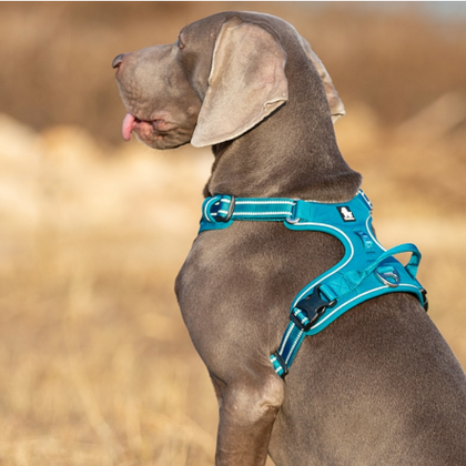Discover our selection of the trended dog supplies in 2021, its best of best dog beds, mats, toys, harnesses, leashes, collars, clothes, accessories, towels, cleaning & grooming supplies, training & behavior supplies, car safety.