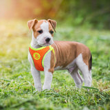 Small Harness And Leash - Dogzy Home
