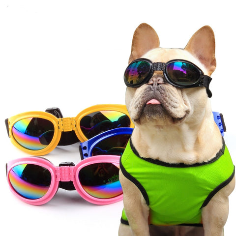6 Color Glasses - Dogzy Home