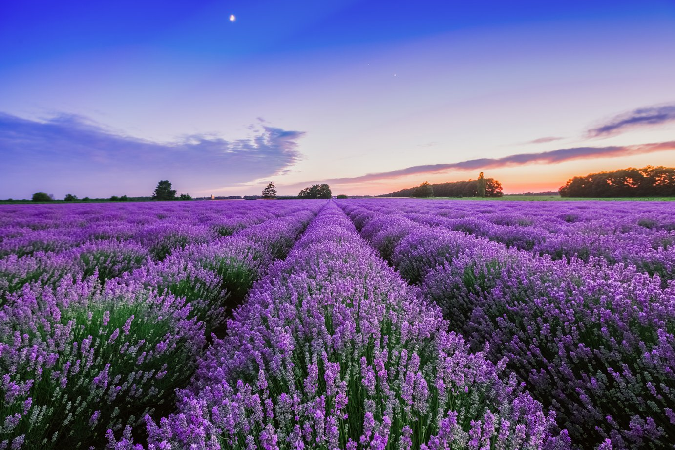 Why do we like Lavender?