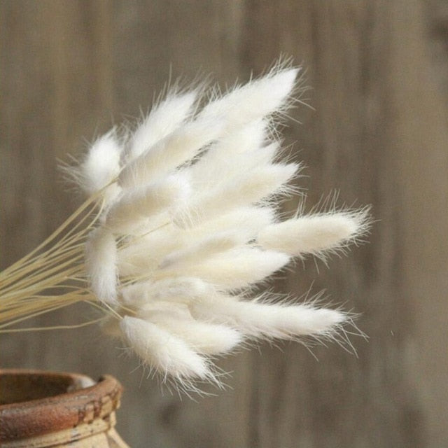Bulrush Natural Dried Small Pampas Grass