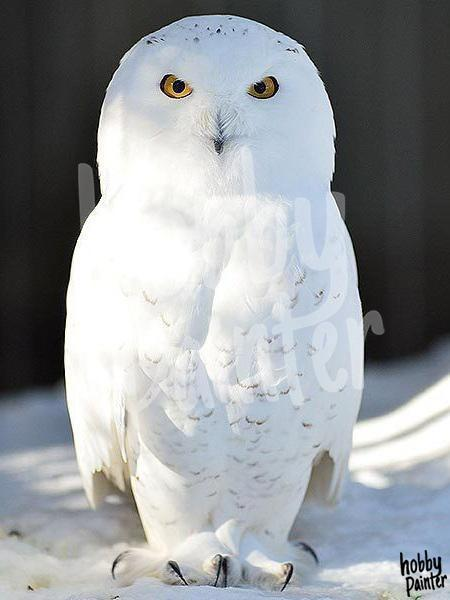Diamond painting snow owl