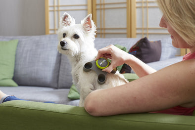 Best Dog Massage Tools for Your Furry Friend