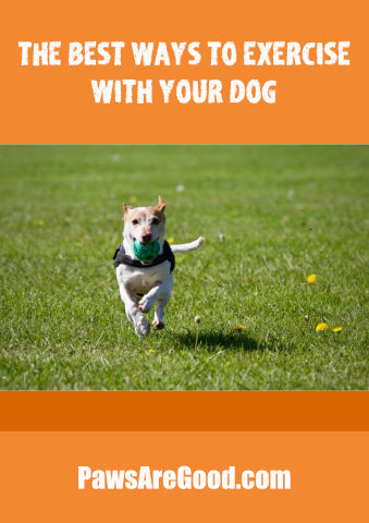 Best ways to exercise with a dog