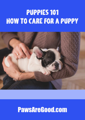 how to care for a puppy