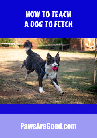 How to teach a dog to fetch toy