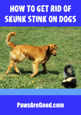 how to get rid of skunk stink on dogs
