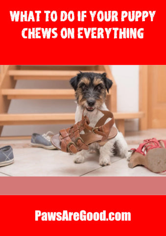 What to do if your puppy chews on everything