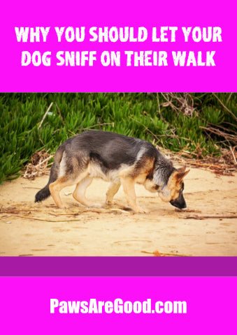 Why you should let your dog sniff on their walk