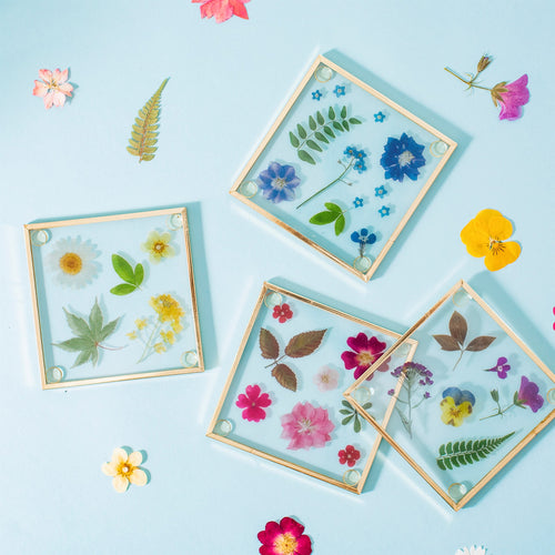 Sass and Belle set of four glass coasters with beautiful press flower design, with a gold border.  Size - L10 x W2 x H10 cm