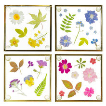 Load image into Gallery viewer, Sass and Belle set of four glass coasters with beautiful press flower design, with a gold border.  Size - L10 x W2 x H10 cm