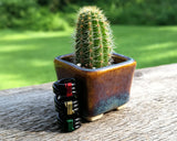 Comparison view of Banded Rasta Dread Bead beside a mini cactus.