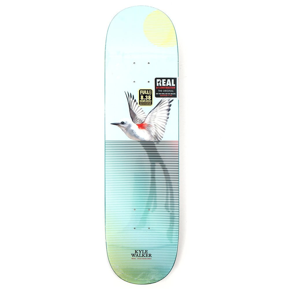 Real Kyle Segment II Deck Blue 8.38