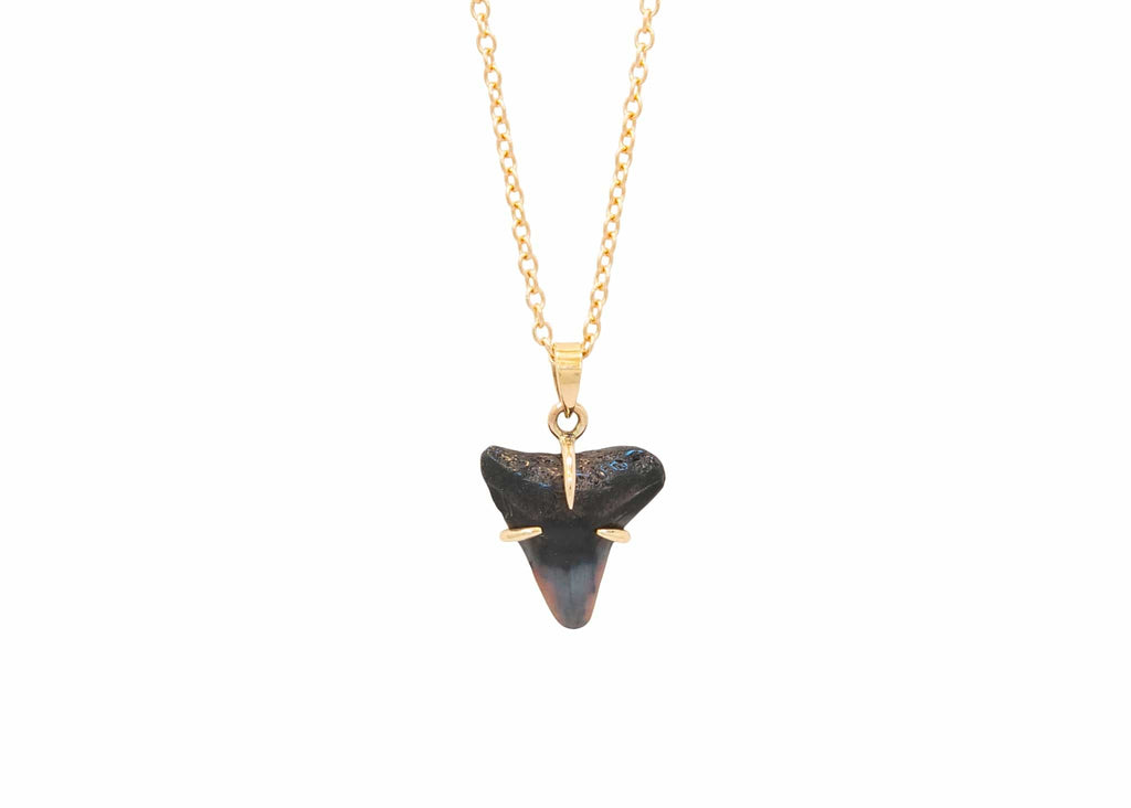 prong set 14k gold fossilized shark tooth necklace