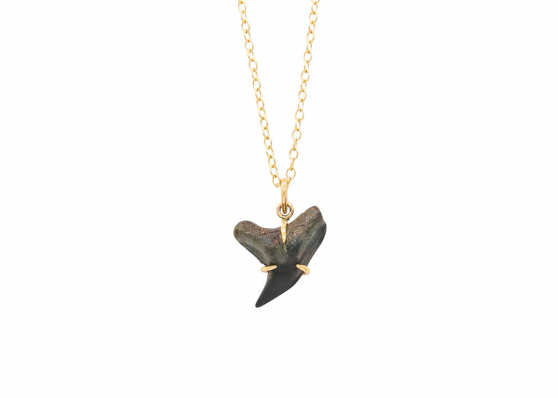 prong set 14k gold prong set fossilized tiger shark tooth necklace