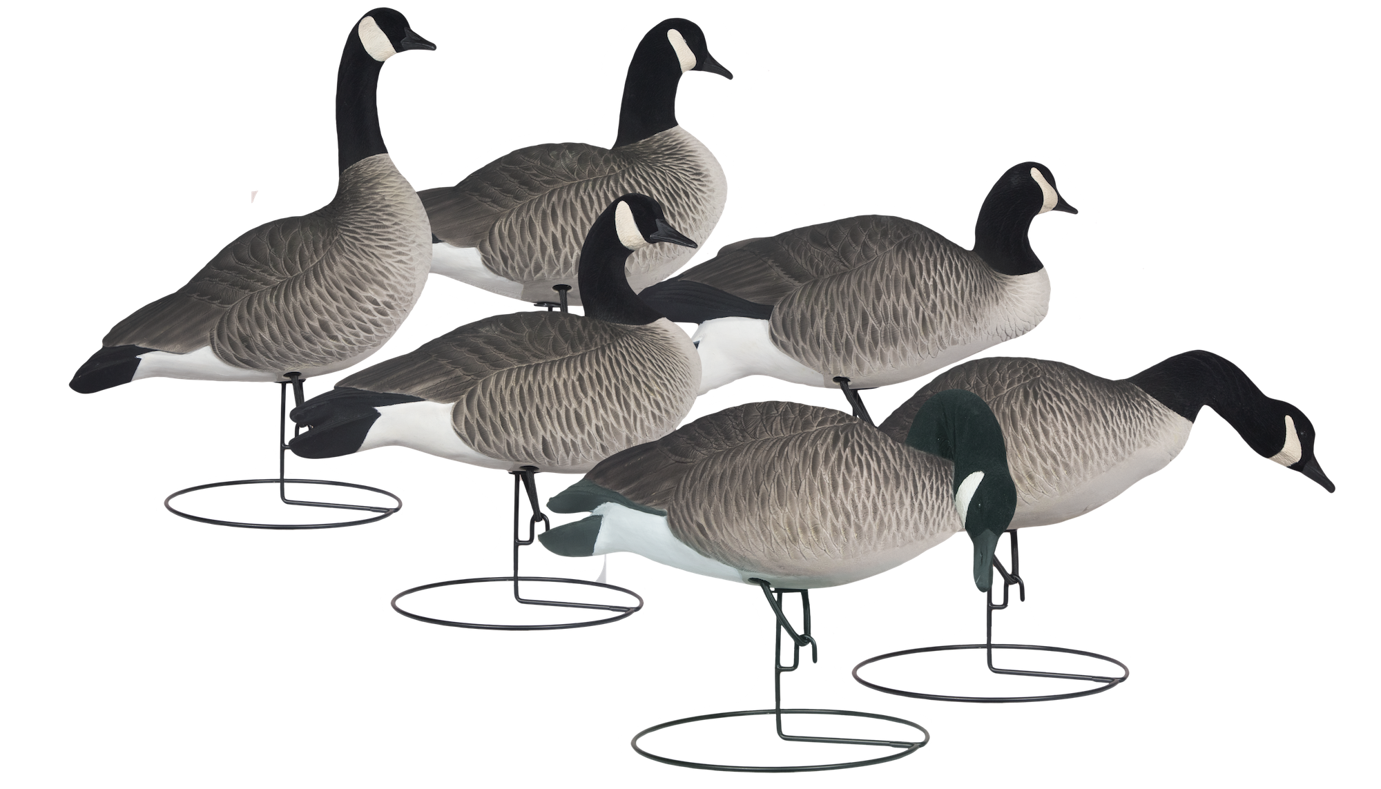 Rugged Series Full Body Canada Goose Decoys - Fully Flocked Feeder & Touchdown Packs
