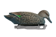 Rugged Blue-winged Teal Surface Feeder Hen Floater