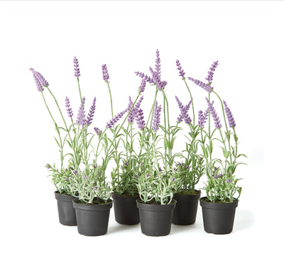 "Lavender, French, 13"" - Danshire Market and Design"