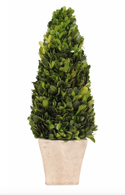 Topiary, Cone Boxwood, Preserved, 6.75H - Danshire Market and Design